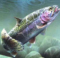 natural baits for trout fishing - uncle jim's worm farm, Fly Fishing Bait
